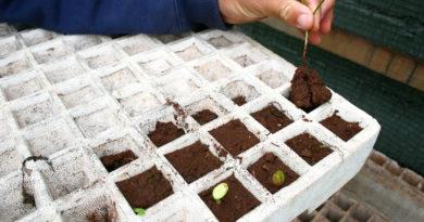 cultivar frutas