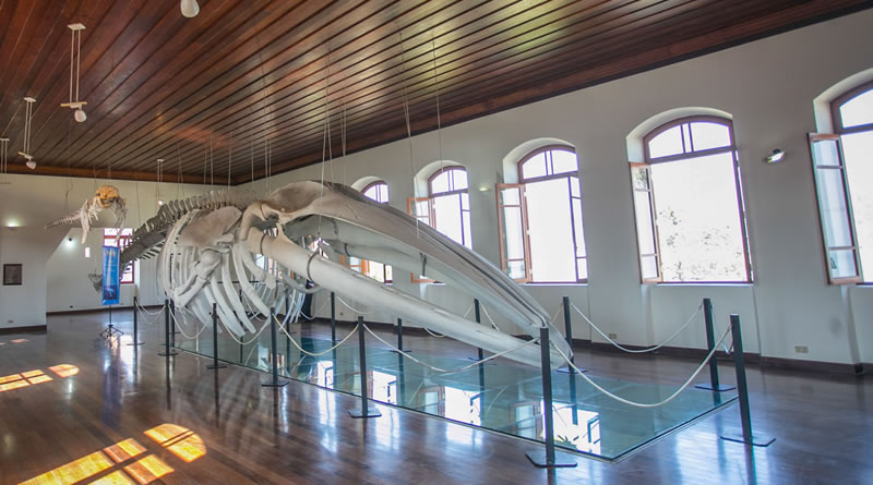 Museu de Pesca