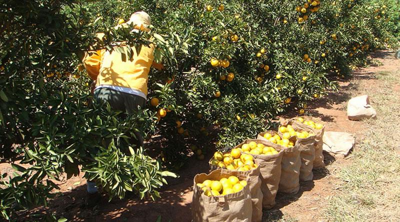 benefícios das frutas
