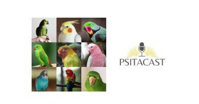 11 dicas para ter aves pet
