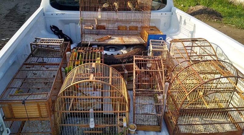 Guarda Ambiental de Praia Grande realiza a apreensão de pássaros silvestres