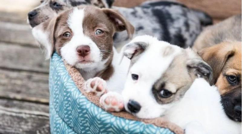 No Dia Nacional da Adoção, médico-veterinário fala sobre os principais cuidados em adotar um pet