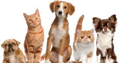 Conheça o programa de castração social de animais domésticos de Itanhaém