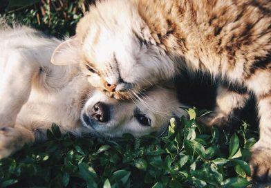 Vacinação dos pets deve ser atualizada anualmente