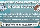 Prefeitura de Mongaguá abre cadastro para castração de cães e gatos